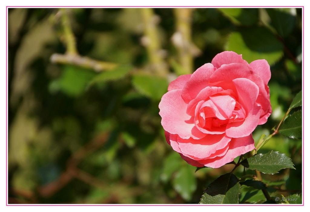 [Fil ouvert] Fleurs et plantes - Page 33 Dsc04924