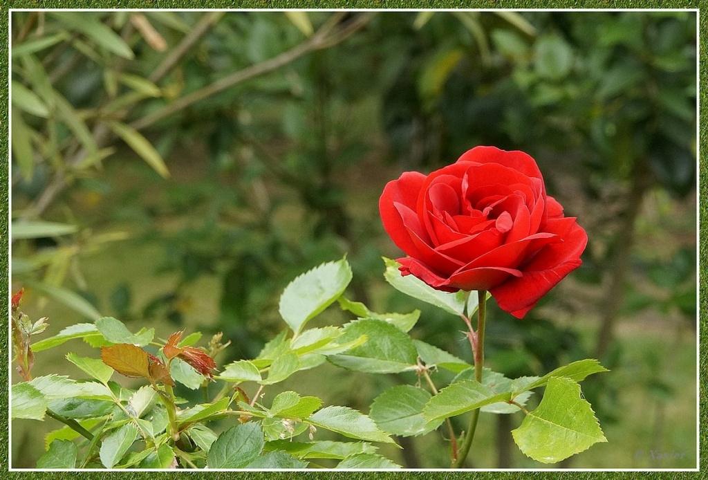 [Fil ouvert] Fleurs et plantes - Page 33 Dsc04926
