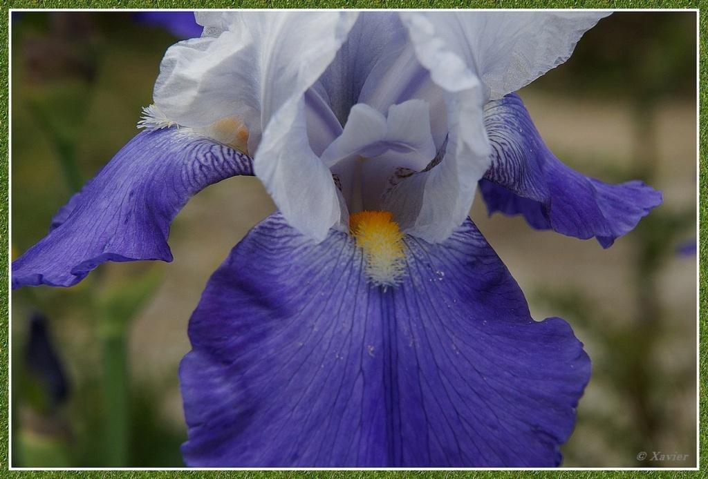 [Fil ouvert] Fleurs et plantes - Page 33 Dsc04927