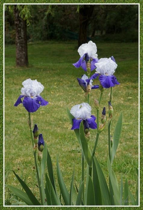 [Fil ouvert] Fleurs et plantes - Page 33 Dsc05014