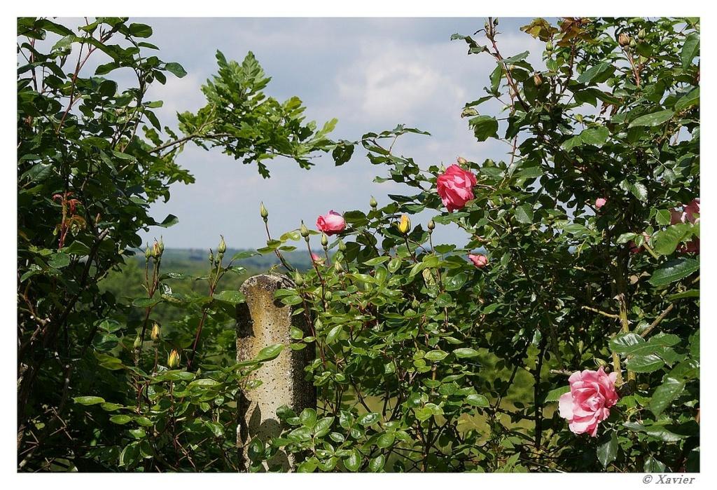 [Fil ouvert] Fleurs et plantes - Page 33 Dsc05017