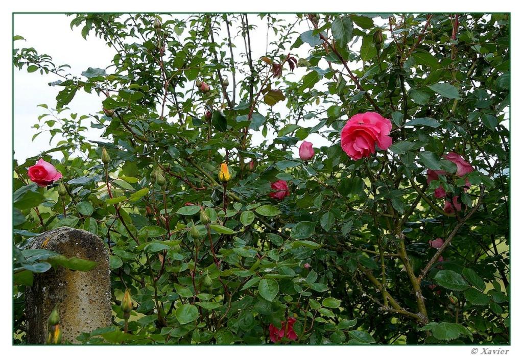 [Fil ouvert] Fleurs et plantes - Page 33 Dsc05018