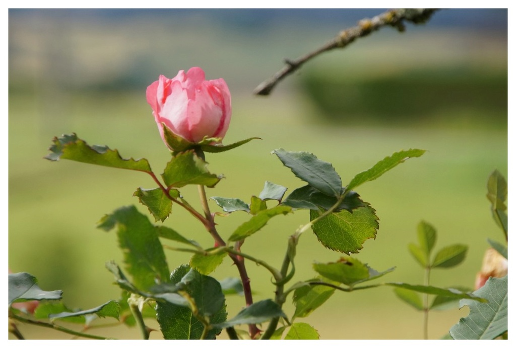 [Fil Ouvert] Fleurs - Page 22 Dsc08811