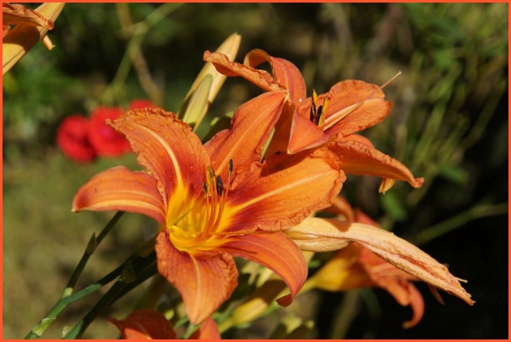 [Fil Ouvert] Fleurs - Page 22 Dsc08812