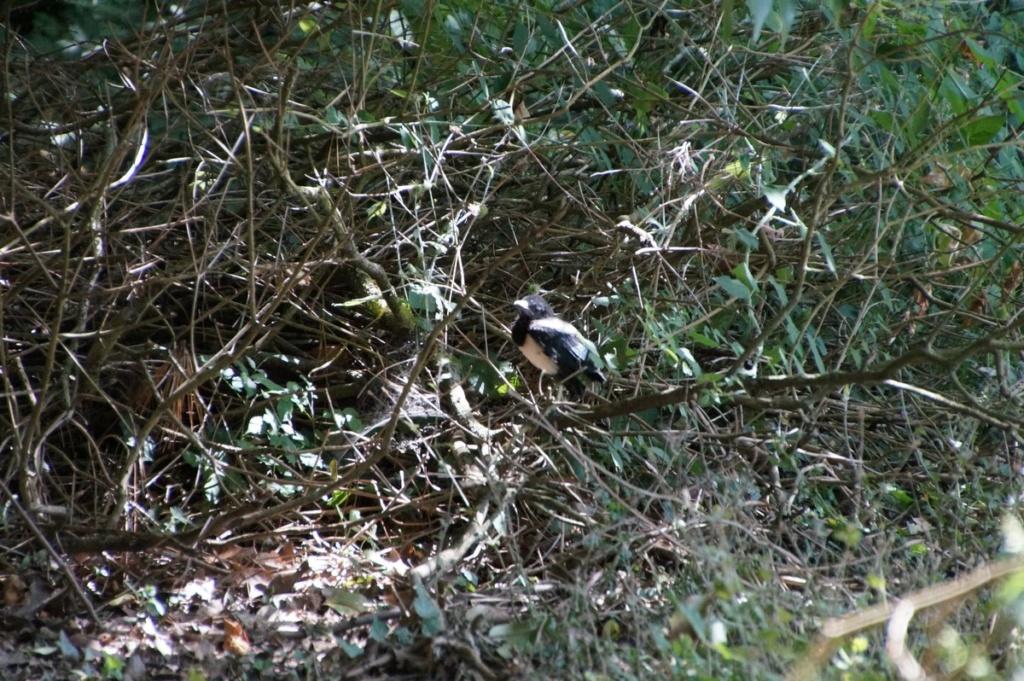 [Ouvert] FIL - Oiseaux. - Page 14 Dsc08842