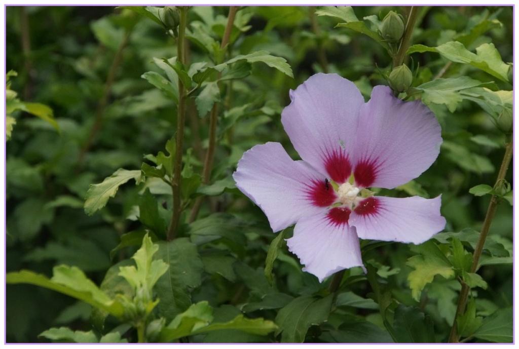 [Fil Ouvert] Fleurs - Page 22 Dsc08912