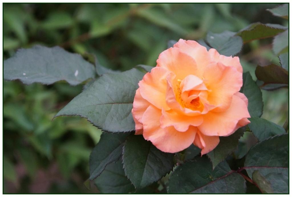 [Fil Ouvert] Fleurs - Page 22 Dsc08913