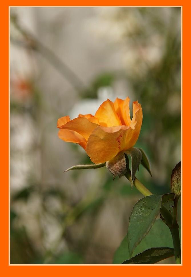 [Fil Ouvert] Fleurs - Page 23 Dsc09010
