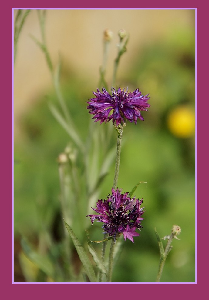 [Fil Ouvert] Fleurs - Page 23 Dsc09011