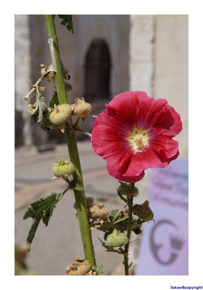 [Fil Ouvert] Fleurs - Page 24 Dsc09032
