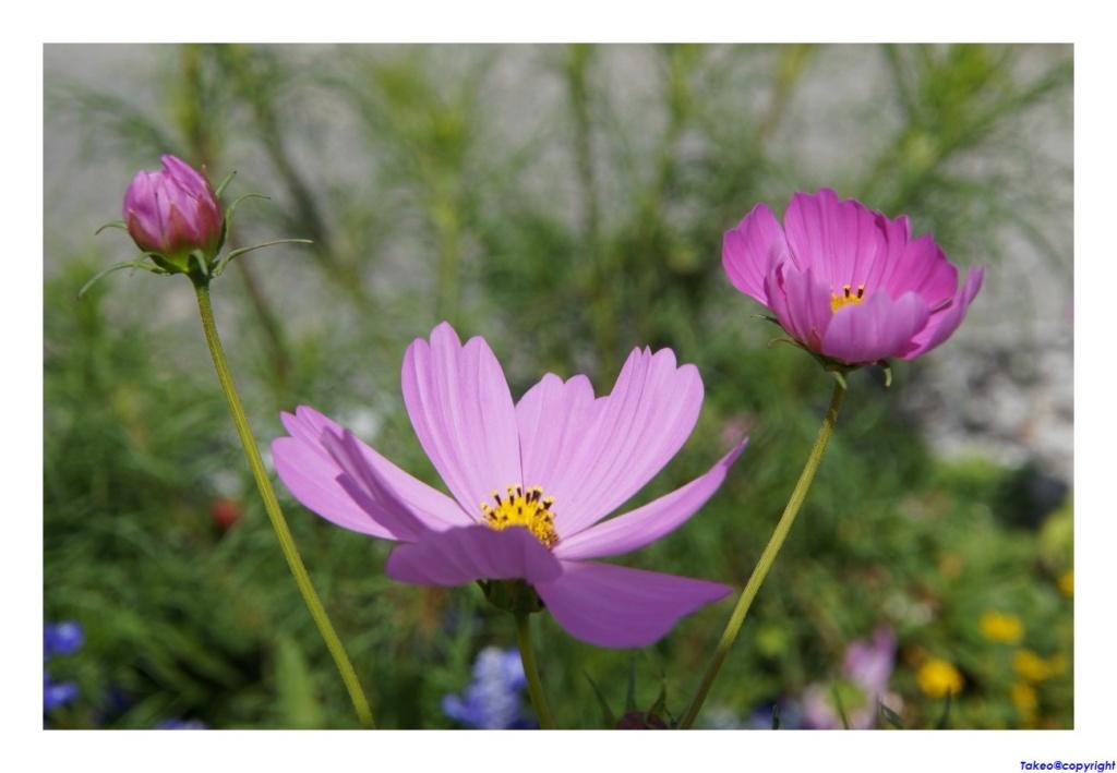 [Fil Ouvert] Fleurs - Page 24 Dsc09033