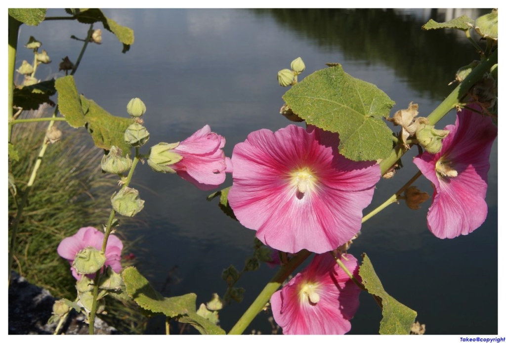[Fil Ouvert] Fleurs - Page 24 Dsc09034