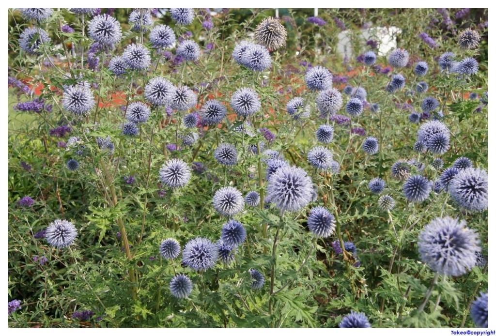 [Fil Ouvert] Fleurs - Page 24 Dsc09220
