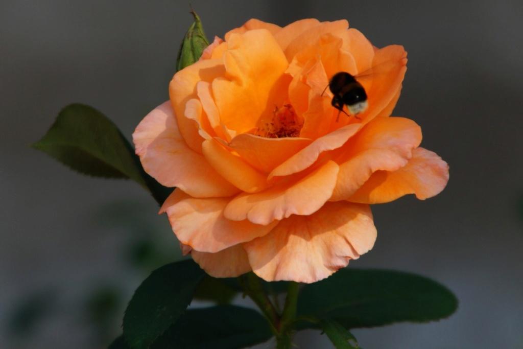 [Fil Ouvert] Fleurs - Page 24 Dsc09828