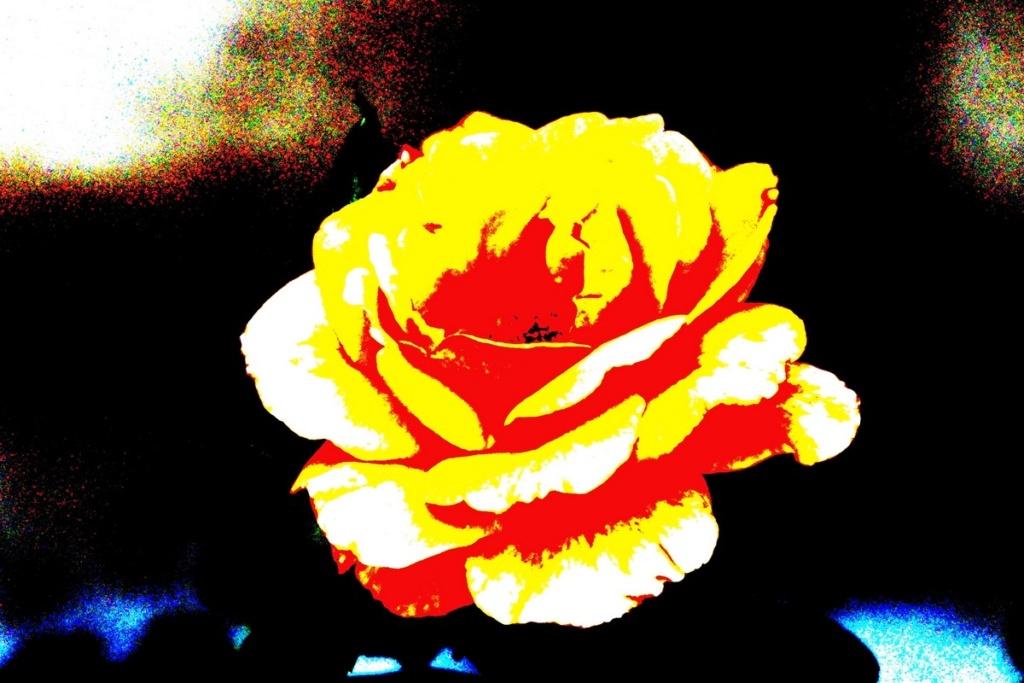 [Fil Ouvert] Fleurs - Page 24 Dsc09829