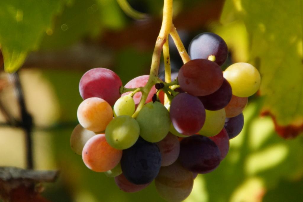 [Fil ouvert] Fruit sur l'arbre - Page 10 Dsc09833