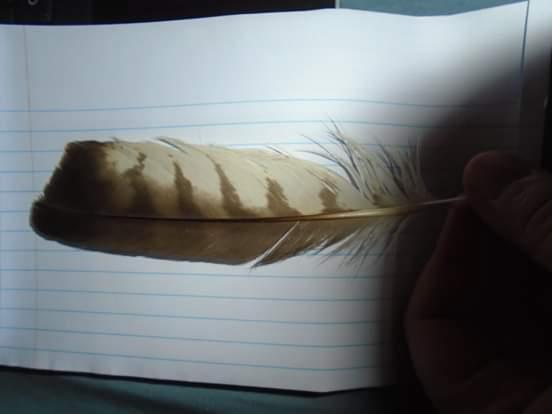 Identification de plumes Fb_img10