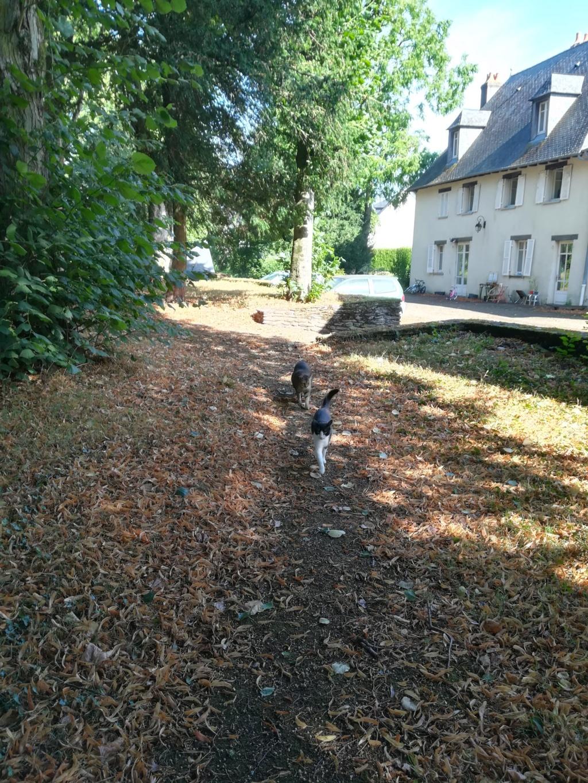 KIT-KAT chat noir et blanc 1 an FIV+ (ADPK 35) Img_2011