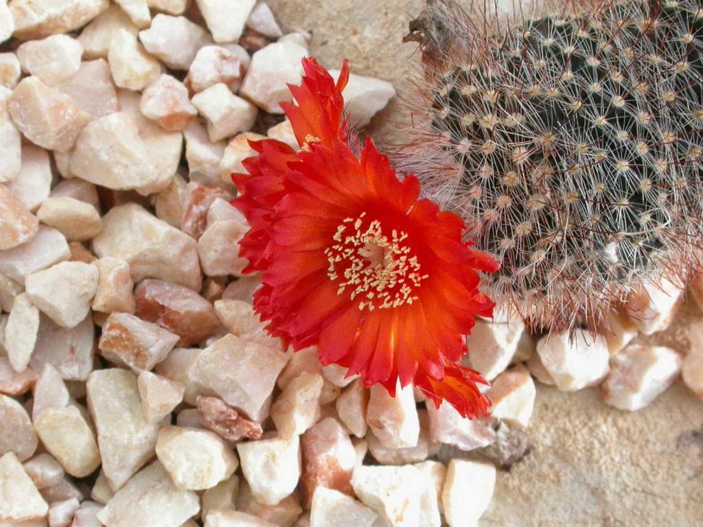 From Madrid public greenhouse 4 Dscn3812