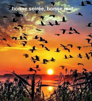 Bonjour -Bonsoir du mois d'Aout  - Page 6 246f9e12