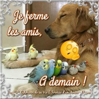 Bonjour -Bonsoir du mois de JANVIER  - Page 2 34b51812