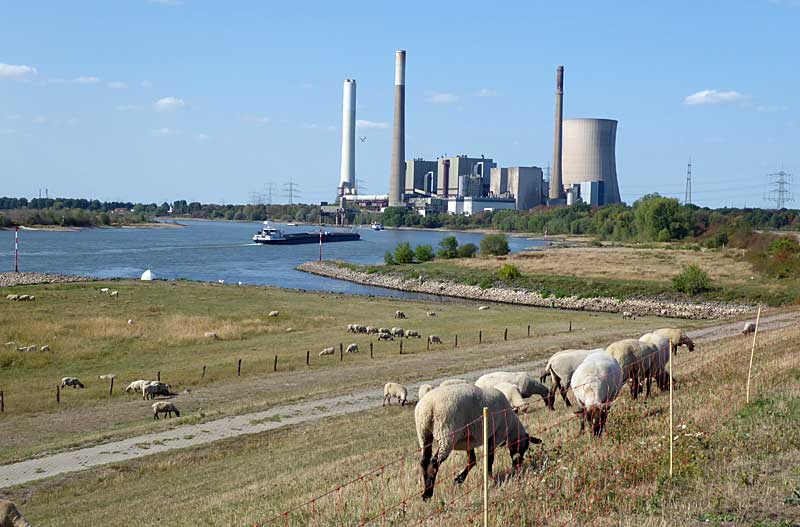 Kleiner Rheinbummel in Duisburg-Ruhrort und Umgebung - Sammelbeitrag - Seite 6 Rbgrhe29