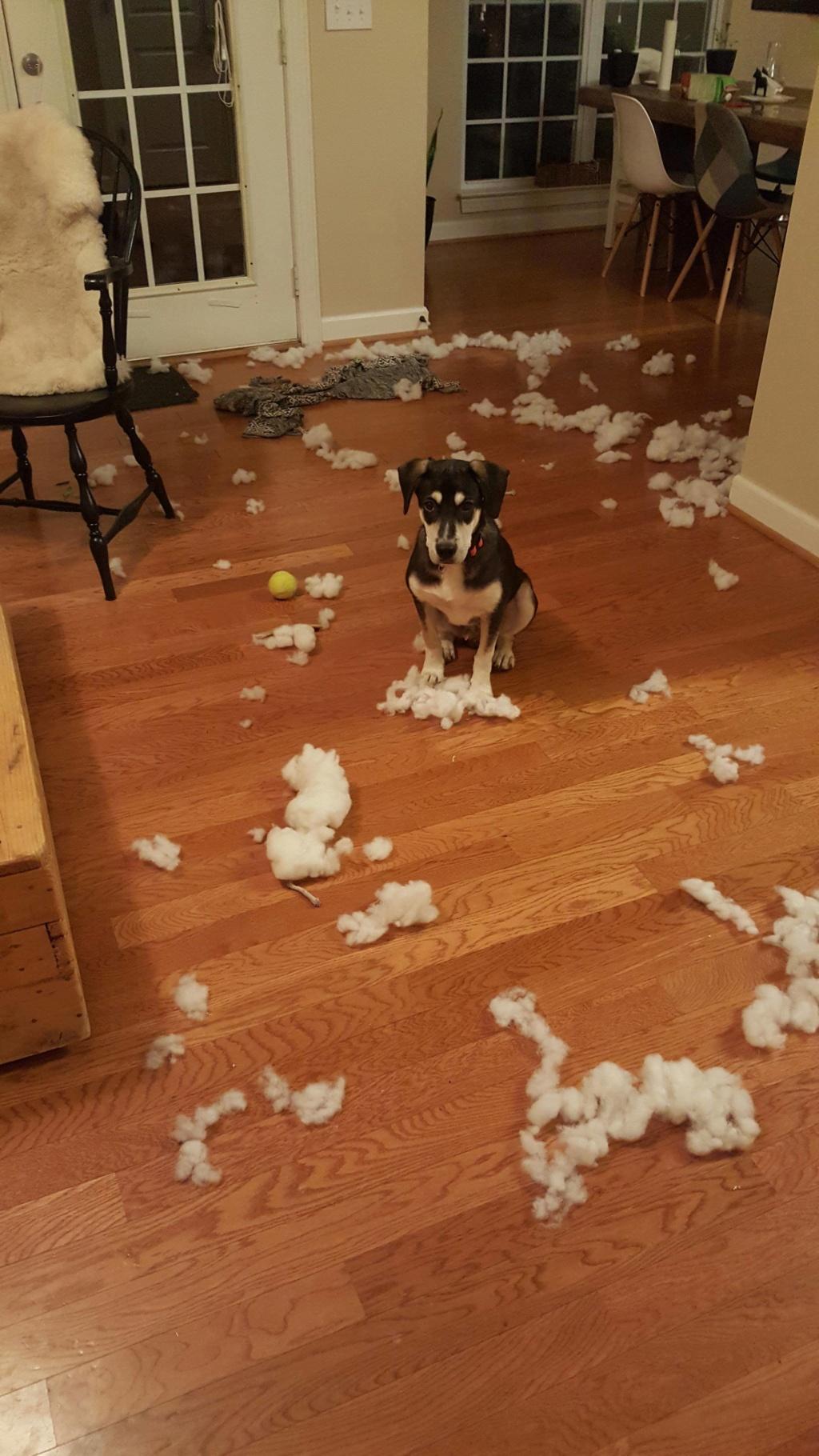 bétises de vos chiens , Mousse10