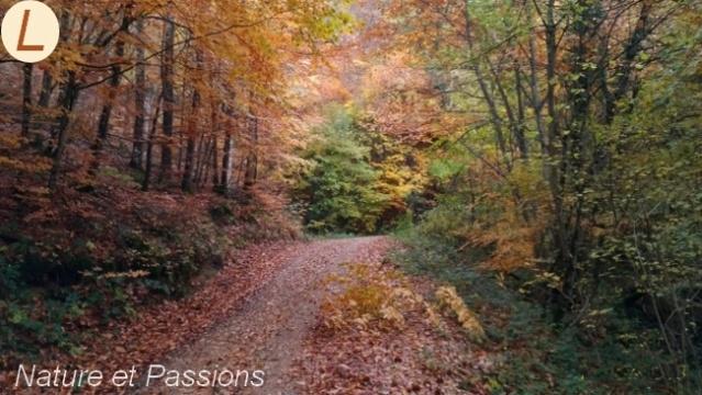 Présentation des photos du mois de novembre L16