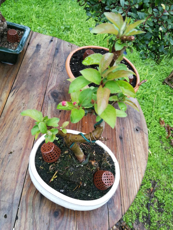 Que hago con el manzano?  Img_2044