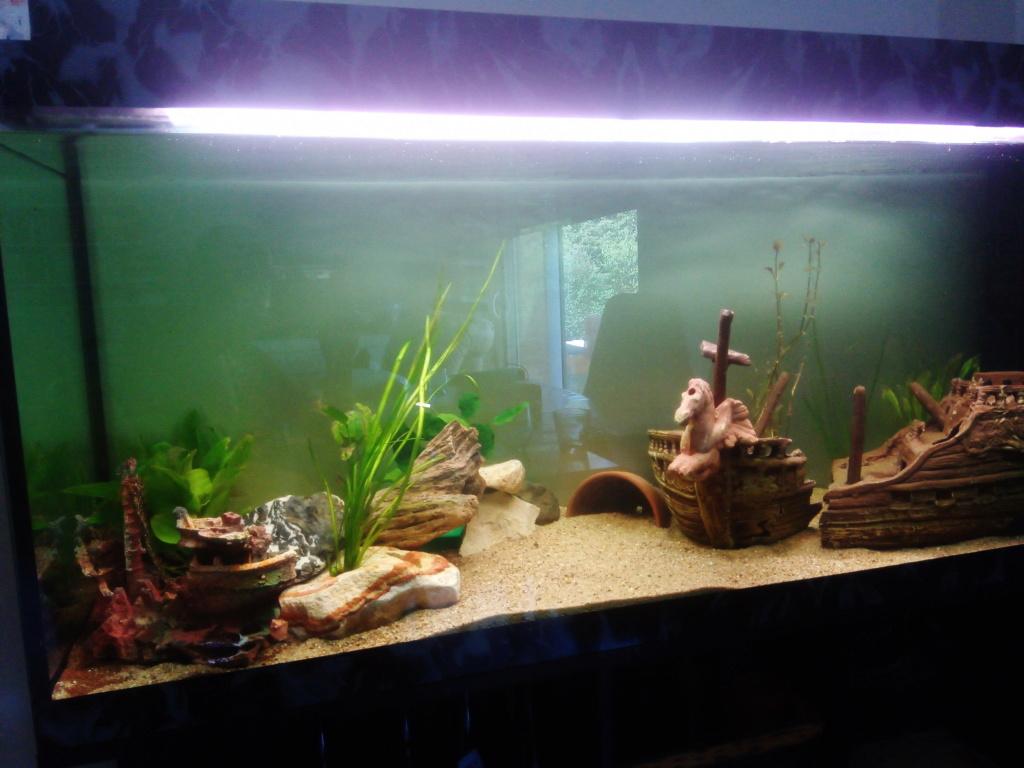Présentation de mon aquarium Ice_2011