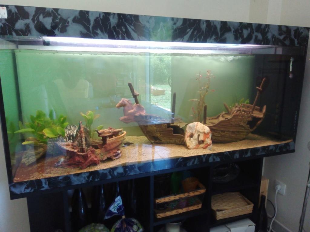 Présentation de mon aquarium Img_2010