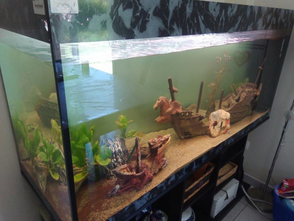 Présentation de mon aquarium Img_2011
