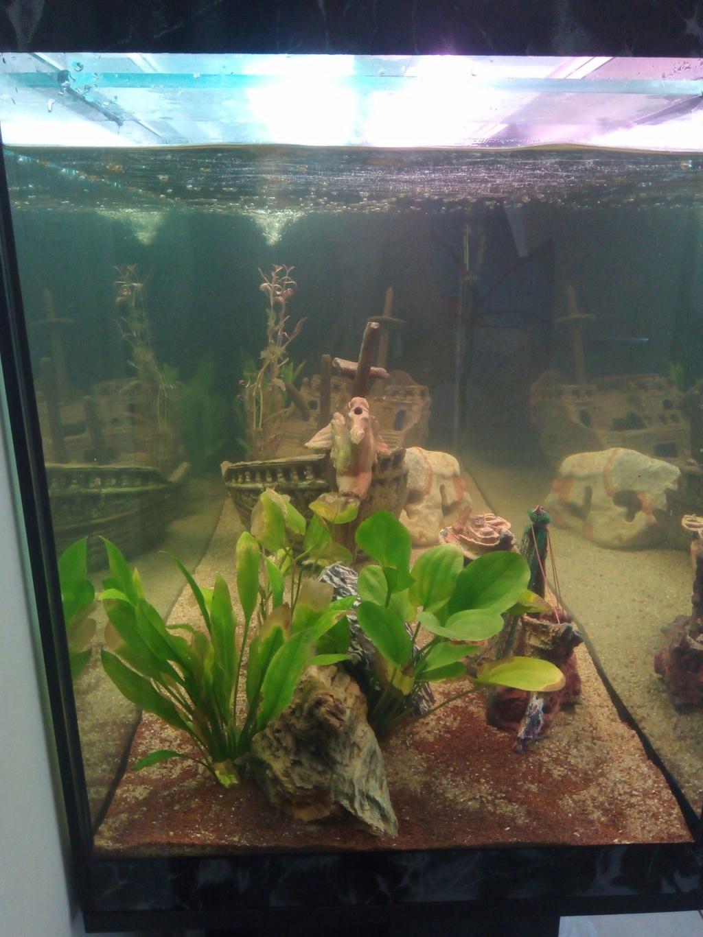 Présentation de mon aquarium Img_2012