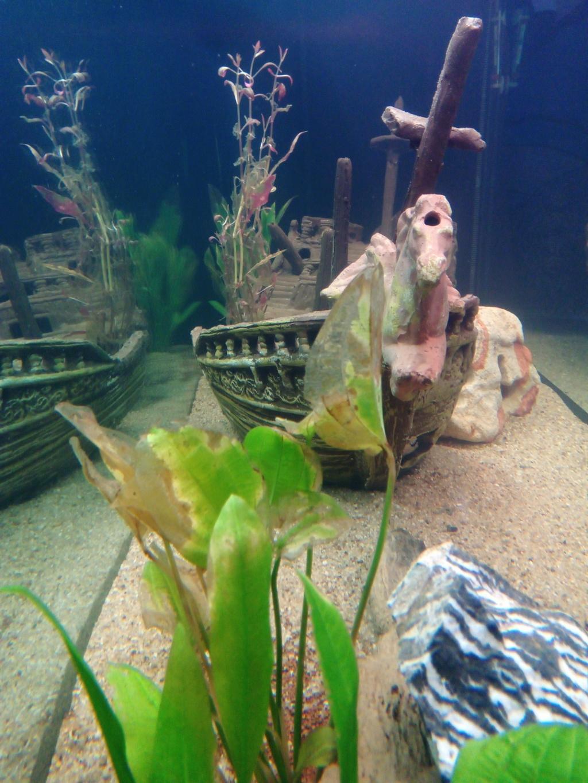 Présentation de mon aquarium Img_2013