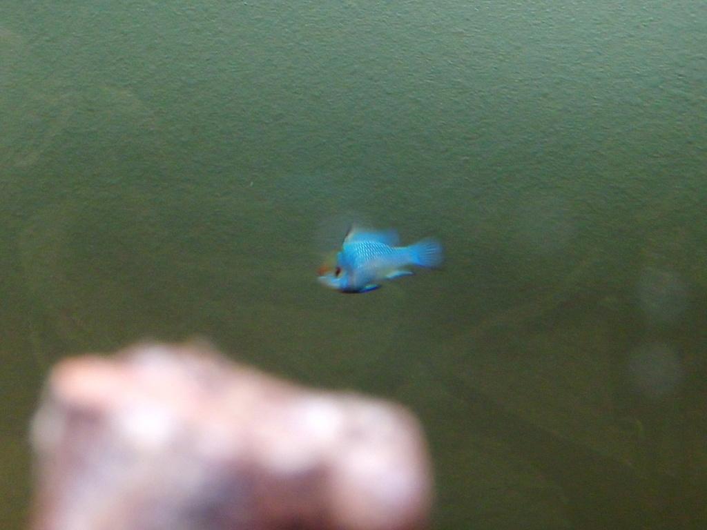 Présentation de mon aquarium Img_2014