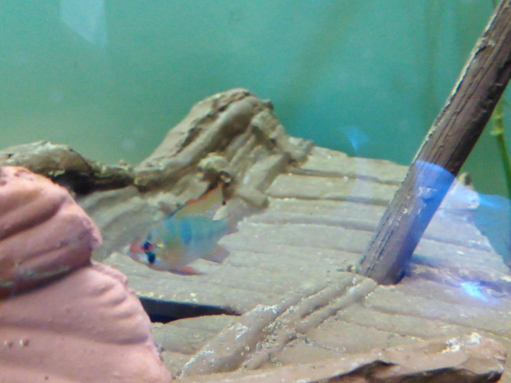 Présentation de mon aquarium Img_2017