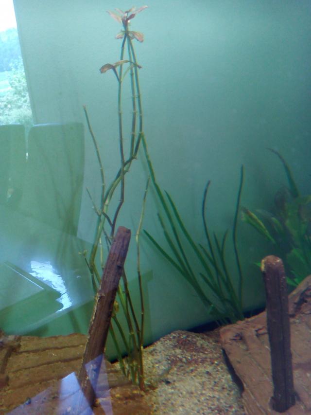 Présentation de mon aquarium - Page 2 Img_2022