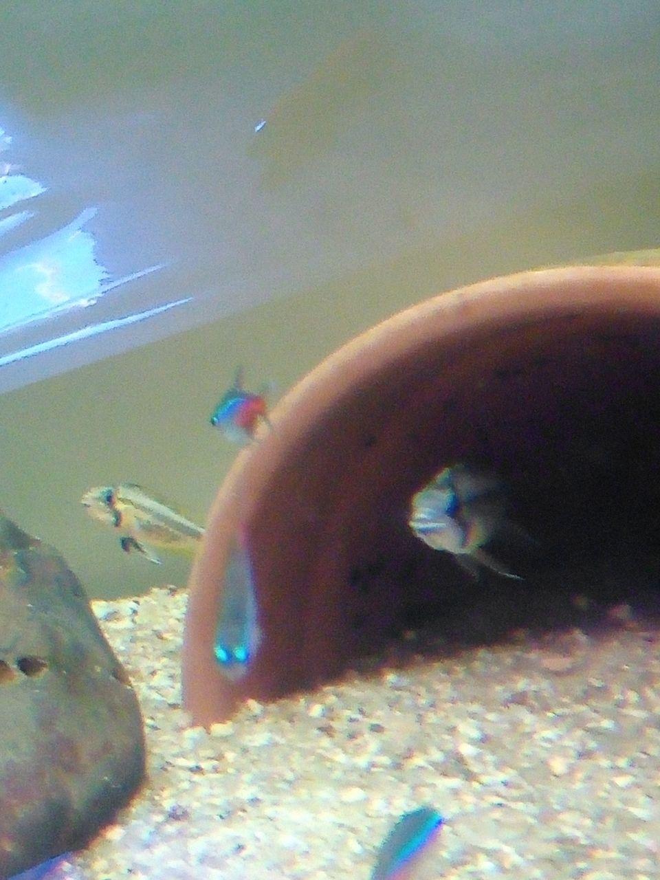 Présentation de mon aquarium - Page 3 Img_2030