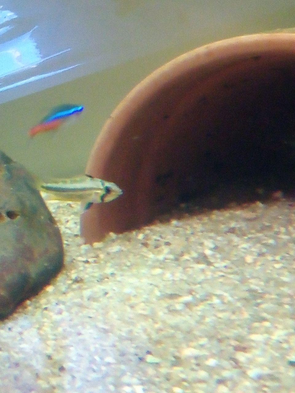 Présentation de mon aquarium - Page 3 Img_2031