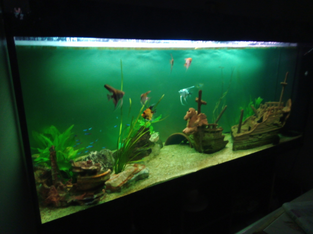 Présentation de mon aquarium - Page 3 Img_2034
