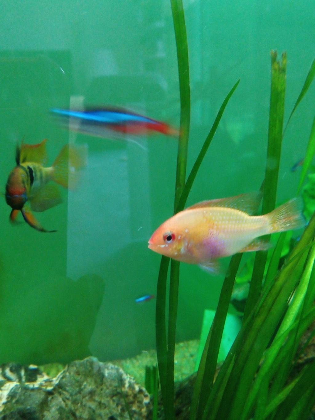 Présentation de mon aquarium - Page 3 Img_2035