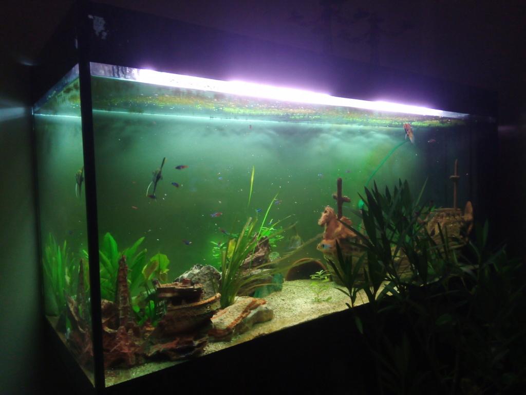 Présentation de mon aquarium - Page 4 Img_2037