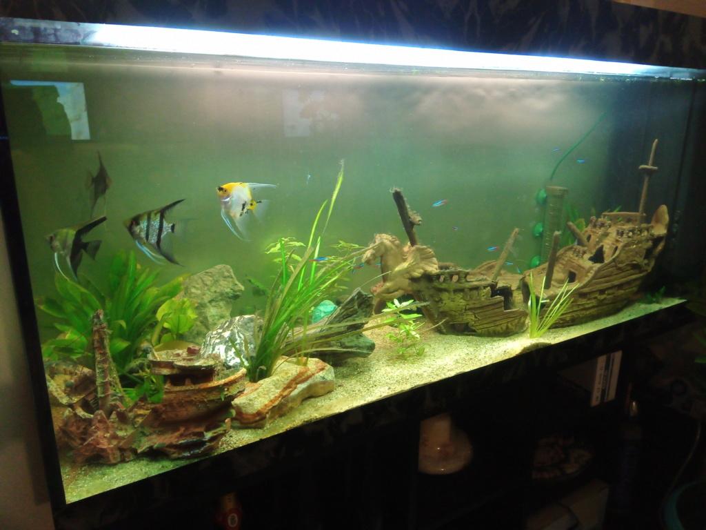 Présentation de mon aquarium - Page 4 Img_2038