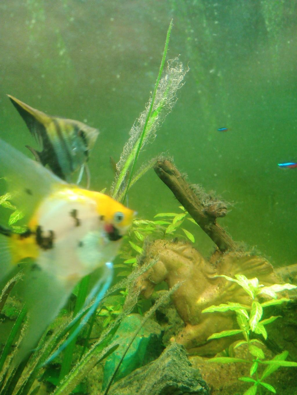 Présentation de mon aquarium - Page 5 Img_2039