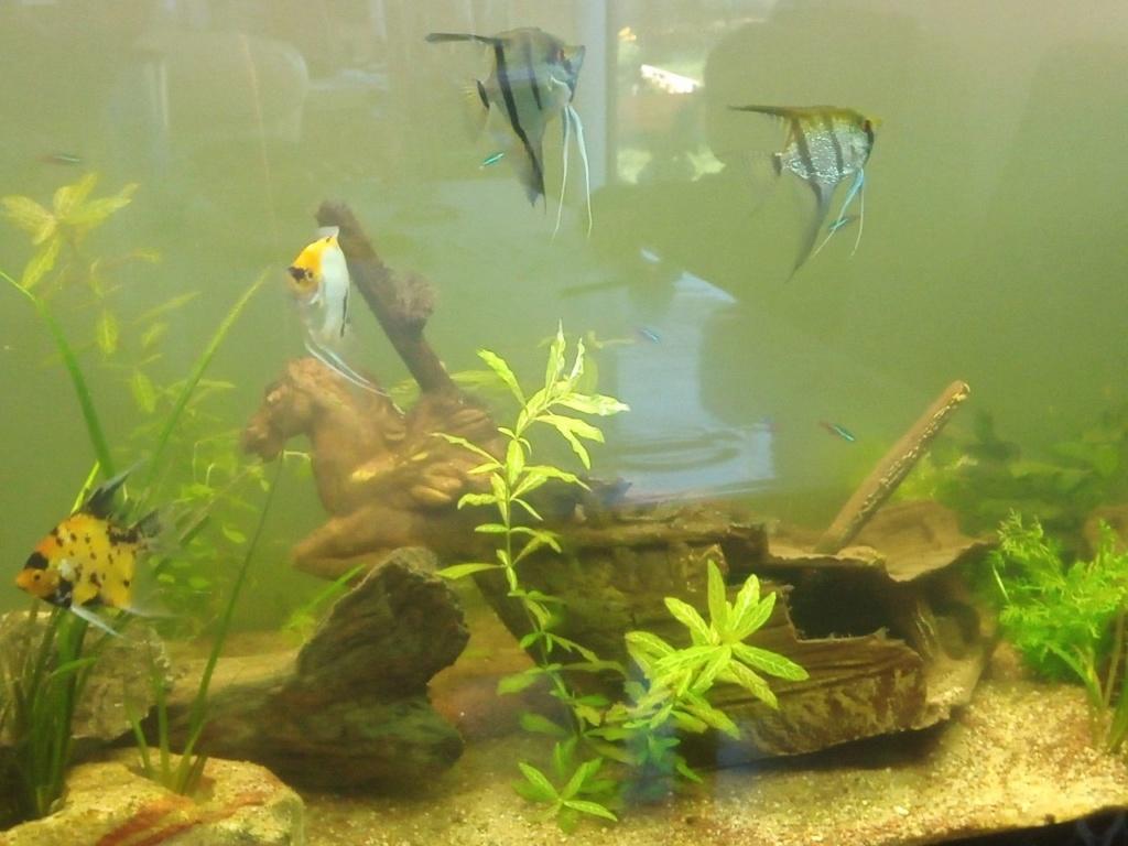 Présentation de mon aquarium - Page 6 Img_2044