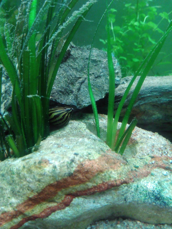Présentation de mon aquarium - Page 6 Img_2045