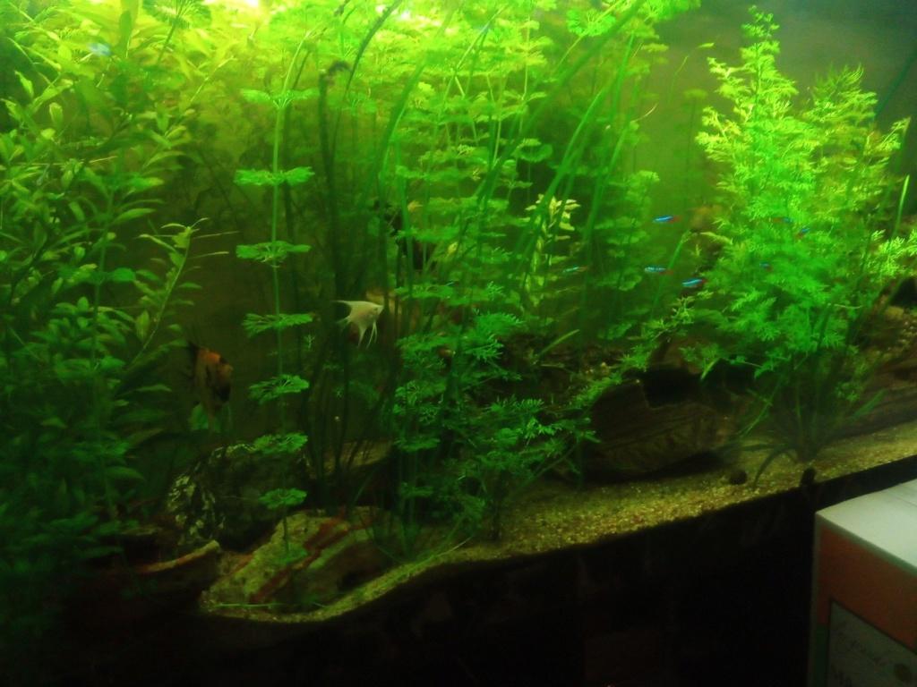 Présentation de mon aquarium - Page 6 Img_2049