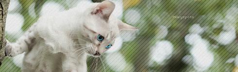 Memories [Kitten Search] Milyos10