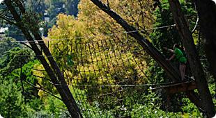 Dia 4 de Maio - Actividade de Arborismo/Natureza 1011