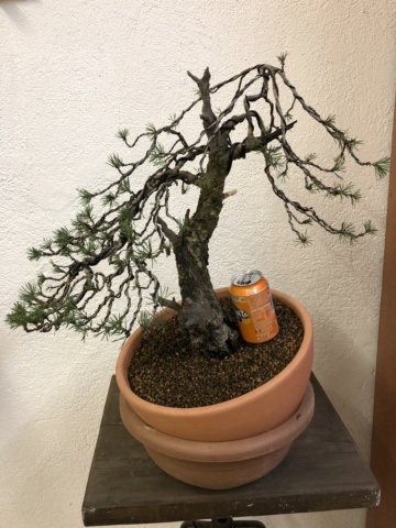 Compro Bonsai 364cb210